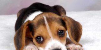 cucciolo anaimale domestico